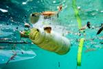 George Monbiot: Urge, Splurge, Purge