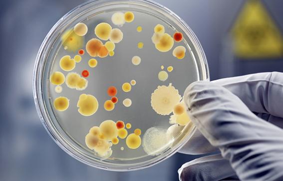 Lobbyists Unite At UN To Put World Biosafety in Danger