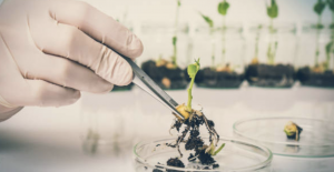 NGOs warn GMO approvals process carries 'unacceptable risk'