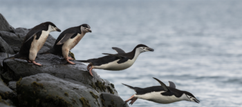 North and South Poles attract marine life avoiding rising heat