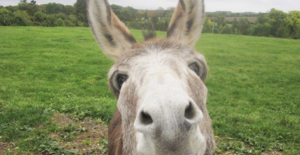 I met Keir Starmer's donkeys – and they told me something about him