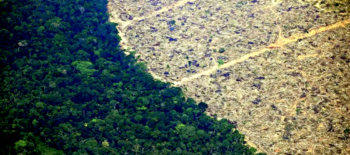 UK investors' $2bn backing for meat giants linked to Amazon deforestation