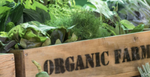 Organic food production 'sidelined' in post-Brexit farming overhaul